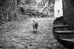 小的失去的狗 免版税库存照片
