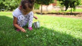 小的女婴采摘草莓果子和雏菊花在乡下庭院里 股票录像