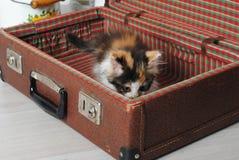 小的嬉戏的小猫三色在手提箱 图库摄影
