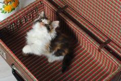 小的嬉戏的小猫三色在葡萄酒手提箱 库存照片