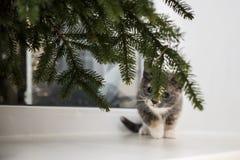小的嬉戏的猫坐窗口基石在窗口在下 库存照片