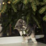 小的嬉戏的猫坐窗台在窗口和pu附近 免版税库存照片