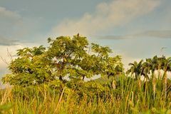 小的密林的树 库存图片