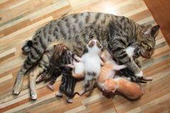 小的小小猫哺乳妈妈猫木头背景 库存照片