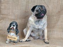 小的小狗二 免版税图库摄影
