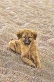 小的小狗杂种动物 免版税库存图片