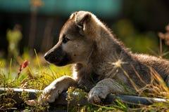 小的小狗粗心大意的童年  免版税库存照片