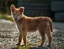 小的小狗粗心大意的童年  免版税图库摄影