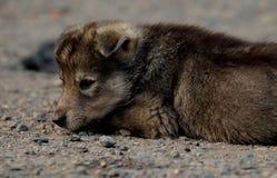 小的小狗粗心大意的童年  免版税库存图片