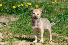 小的小狗 免版税库存图片