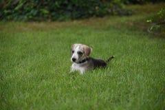 小的小狗 免版税库存照片