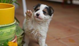 小的小狗 库存图片