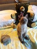 小的小猫和大熊玩偶 免版税库存照片