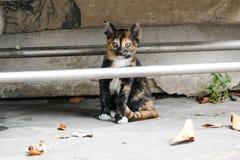 小的小猫在一个寺庙居住在泰国 免版税库存图片