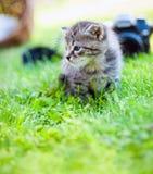 小的小猫,室外 库存照片