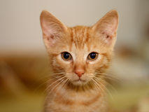 小的小猫 免版税库存图片