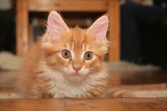小的小猫 免版税库存照片