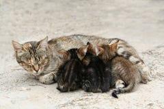 小的小猫 库存图片
