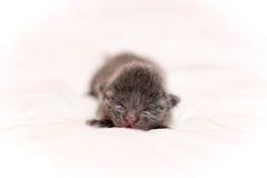 小的小猫 库存照片