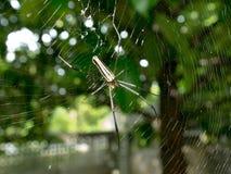小的昆虫在庭院里 库存照片
