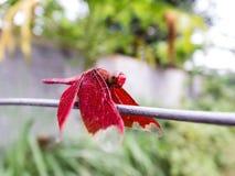 小的昆虫在庭院里 免版税库存照片