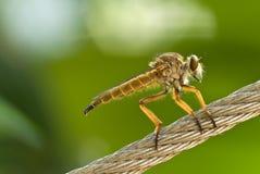 小的昆虫 免版税库存图片