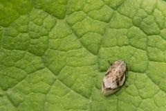 小的昆虫 免版税库存照片