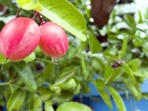 小的果子 免版税图库摄影