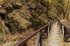 小的桥梁在森林 免版税库存图片