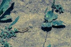 小的棕色蚂蚱 免版税库存照片