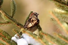 小的棕色鸟 库存图片