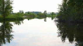 小的森林湖 老安静的池塘 农村的横向 股票视频