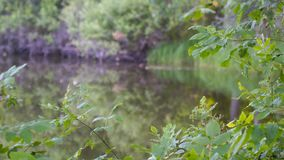 小的森林湖 老安静的池塘 农村的横向 影视素材