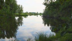 小的森林湖 老安静的池塘 农村的横向 股票录像