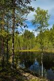 小的森林湖 免版税库存图片