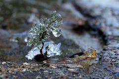 冻小的植物 免版税库存照片