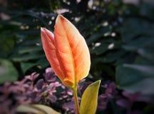 小的橙色叶子 免版税图库摄影