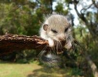 小的毛茸的动物 免版税库存照片