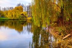 小的池塘在公园 库存图片