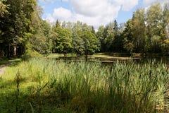 小的池塘 库存照片
