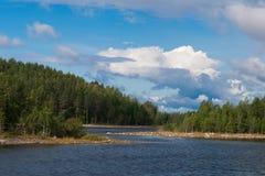 小的河在森林里 库存照片