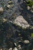 小的河 免版税库存照片