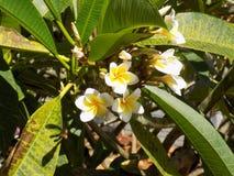 小的浪漫白的黄色花 库存图片