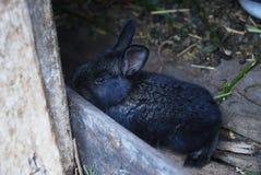 小的深灰兔子 免版税库存图片