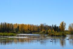 小的湖 免版税库存图片
