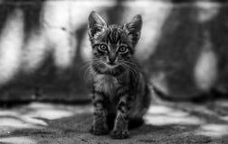 小的灰色猫坐的休息在阳光下 免版税库存图片