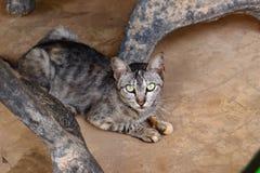 小的灰色猫 免版税库存图片
