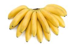 小的热带香蕉 免版税库存图片