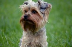 小的狗 图库摄影