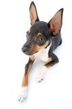 小的狗 免版税图库摄影
